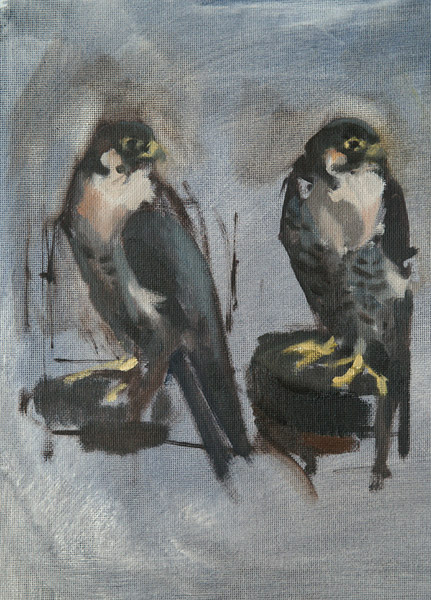 Falcon, oil sketch from life
